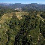 Rencontre dégustation domaine Aquila del Torre (Frioul) @ Le Vin des Alpes | Grenoble | Auvergne-Rhône-Alpes | France