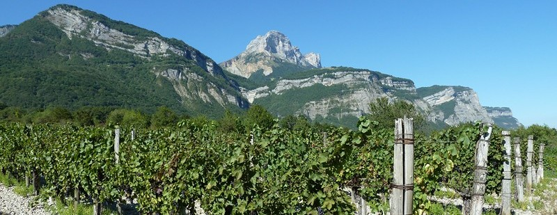 """""""le Grésivaudan est comme le paradis alpestre de la vigne"""" Raoul Blanchard"""