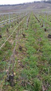 Champagnes de terroir : atelier découverte des vins de Champagne @ Le Vin des Alpes | Grenoble | Auvergne-Rhône-Alpes | France