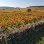 atelier grande dégustation : la Bourgogne @ Le Vin des Alpes | Grenoble | Auvergne-Rhône-Alpes | France