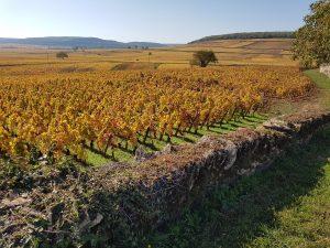 atelier de dégustation : découverte des vins de France bio et nature @ Le Vin des Alpes | Grenoble | Auvergne-Rhône-Alpes | France
