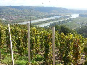 Atelier de dégustation : Au fil du Rhône @ Le Vin des Alpes | Grenoble | Auvergne-Rhône-Alpes | France