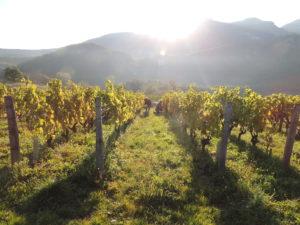 Expressions de la mondeuse noire @ Le Vin des Alpes | Grenoble | Auvergne-Rhône-Alpes | France